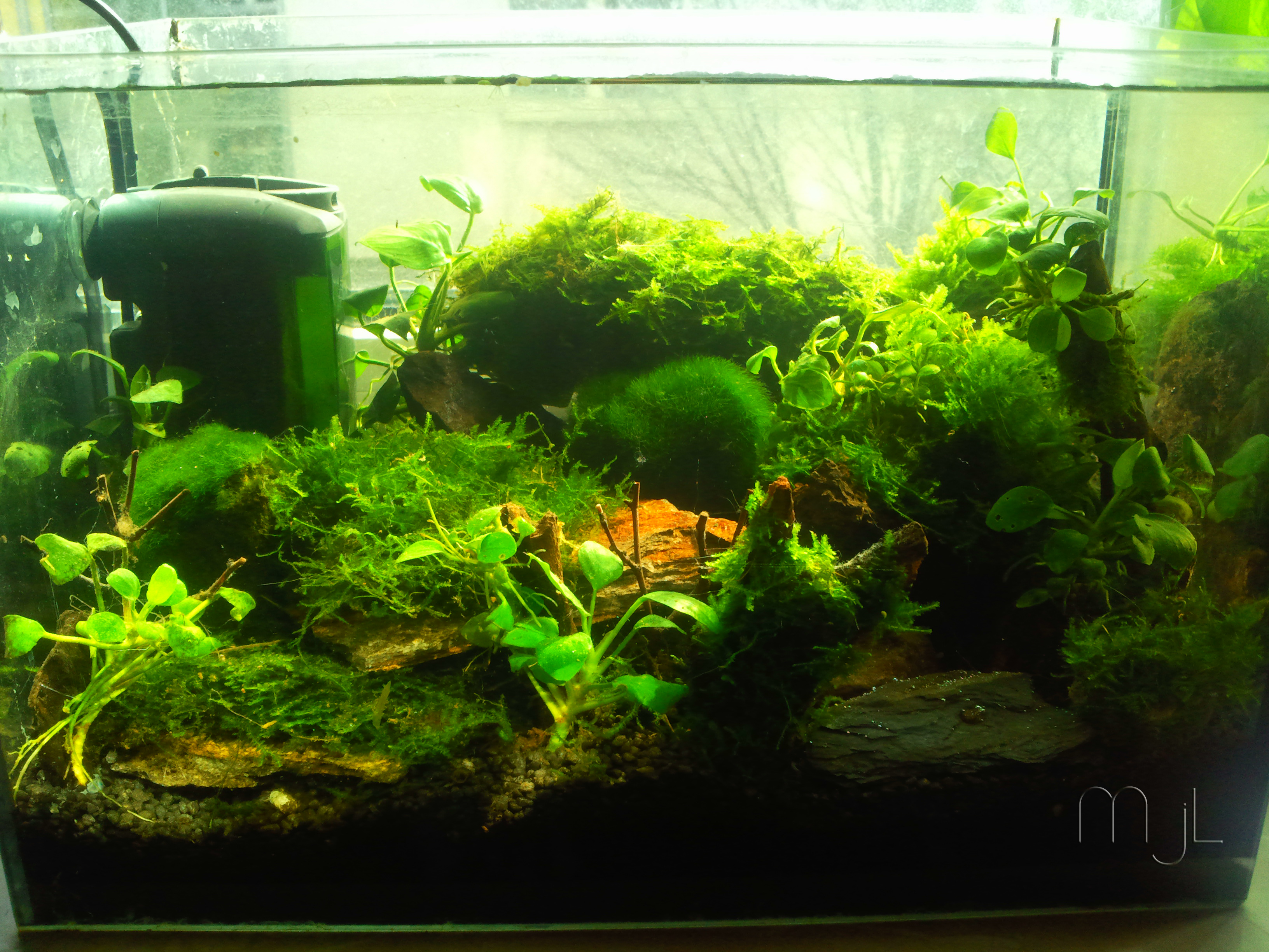 Datei 12 Liter Aquarium Jpg Wikipedia