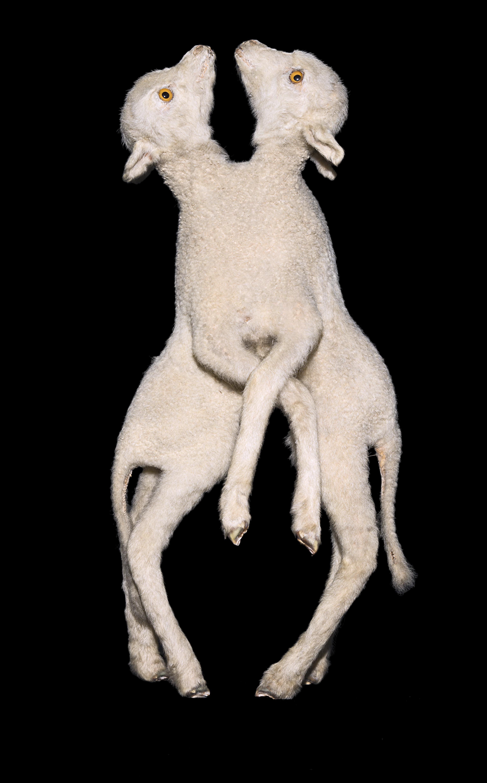 Two headed human