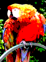 AmstradCPC palette sample image.png