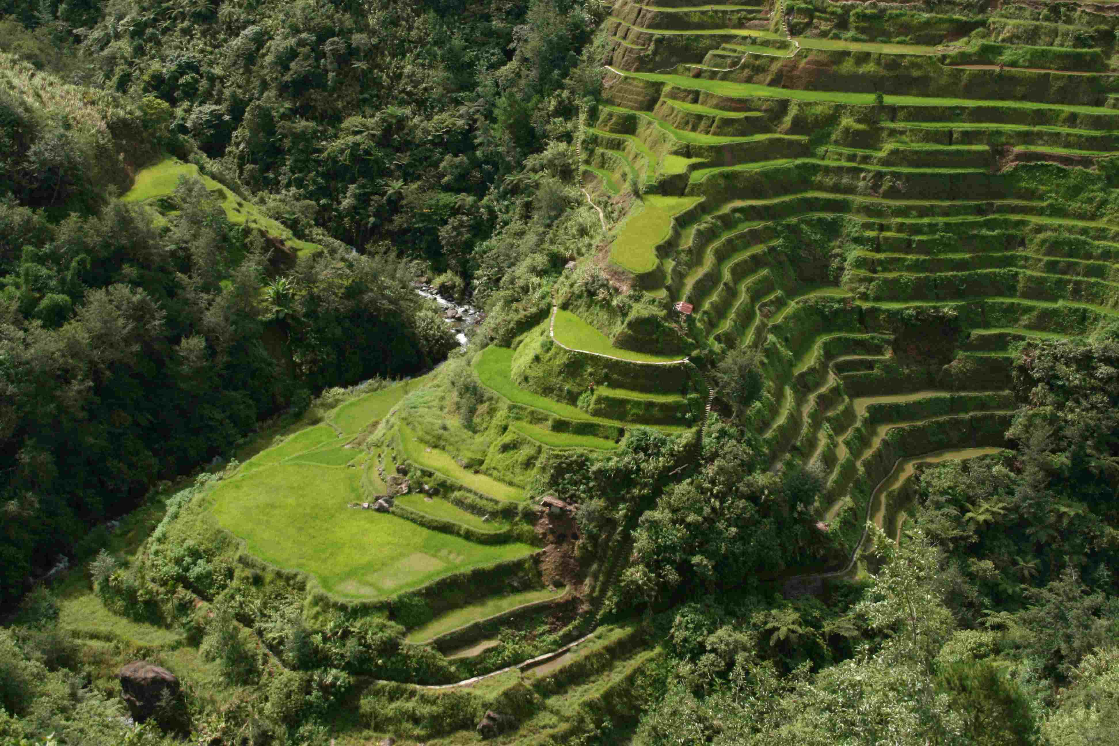 Closer view of the The Banaue Rice Terraces - Surreal places to visit