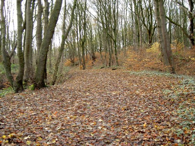 Billinge plantation - geograph.org.uk - 1053005