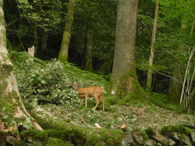 Deer lick resort tranny