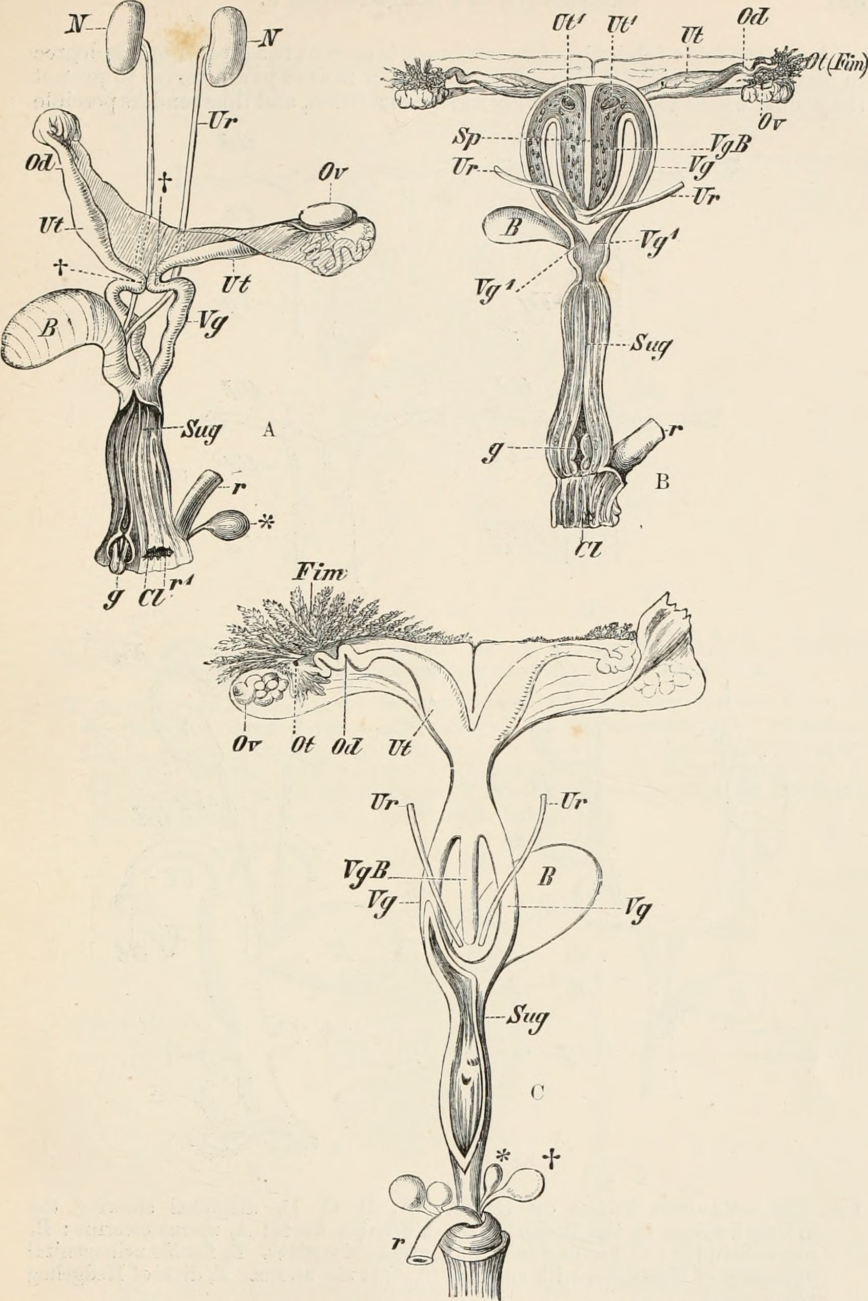 File:Elements of the comparative anatomy of vertebrates (1886 ...