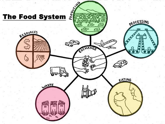 local food essay