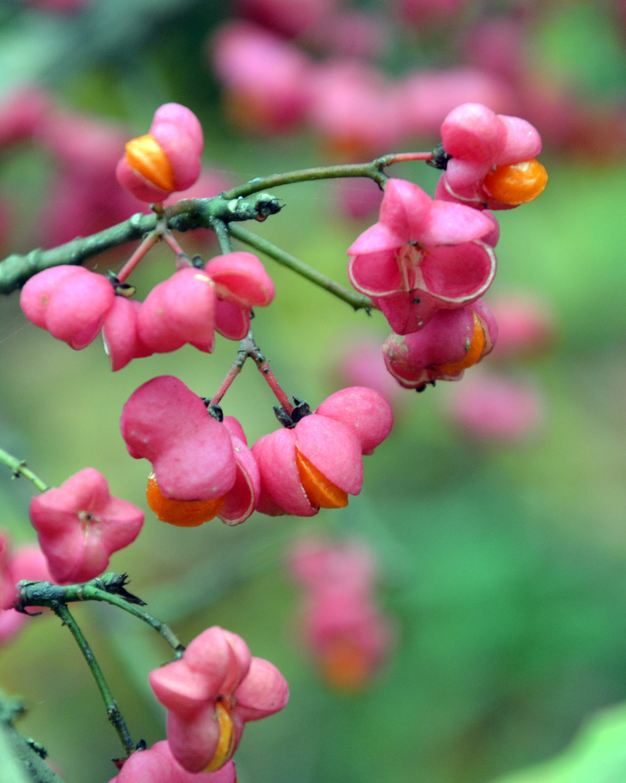 File Herbstblumen In Horodna Jpg Wikimedia Commons