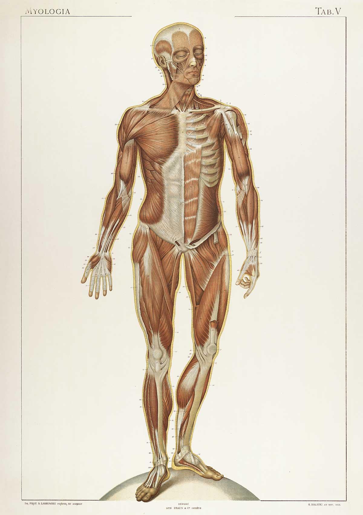 Nett Normale Menschliche Anatomie Fotos - Menschliche Anatomie ...