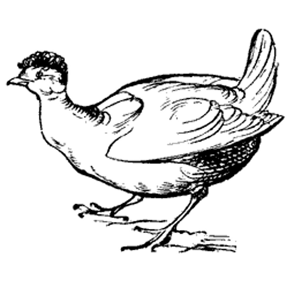 Lear 2 - Hen.jpg