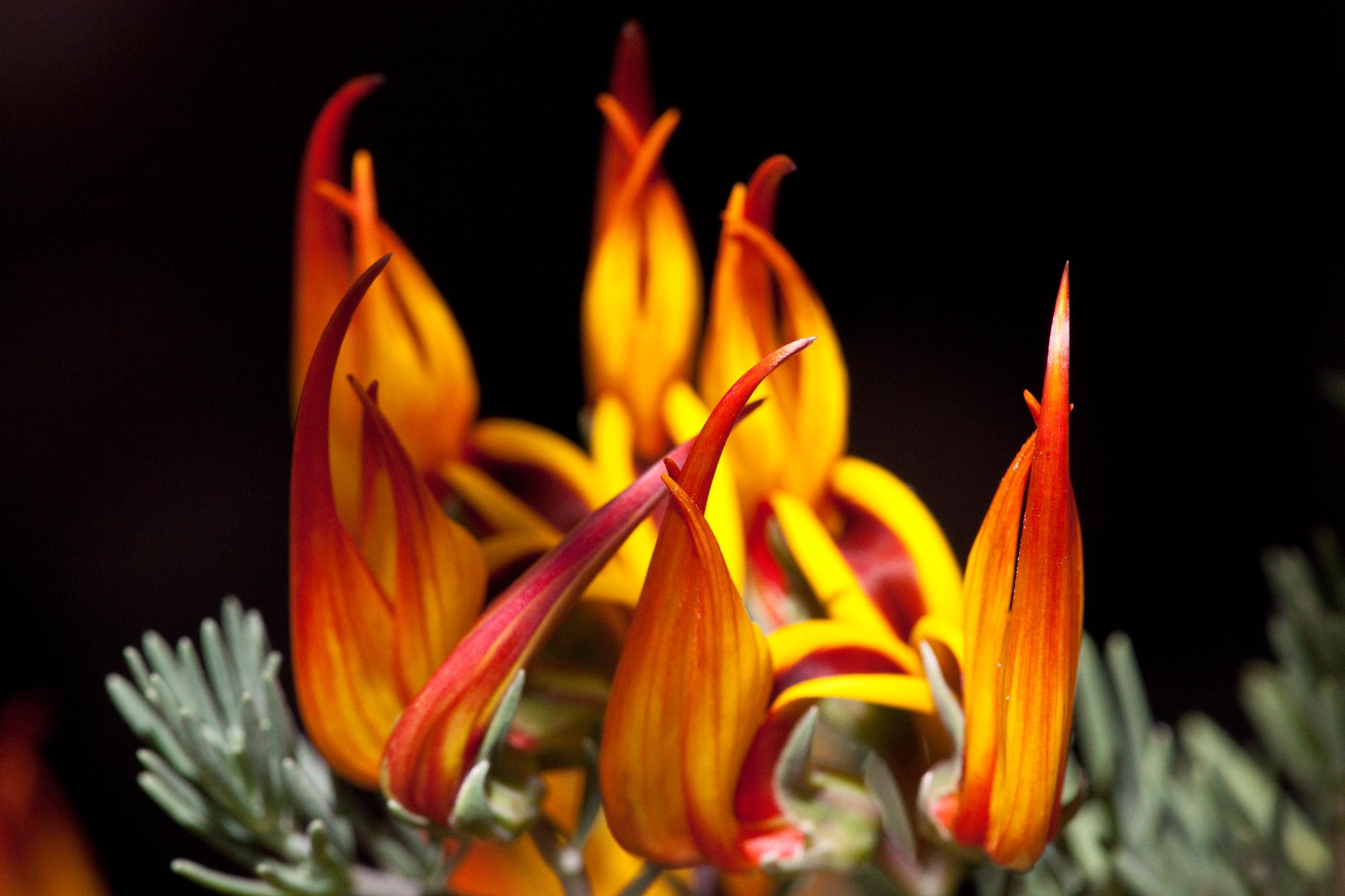 Lotus Genus Wikiwand