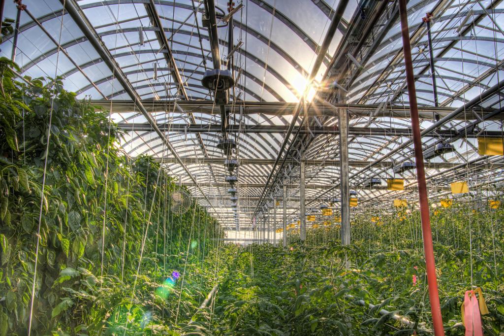 Botania S Garden Of Glass