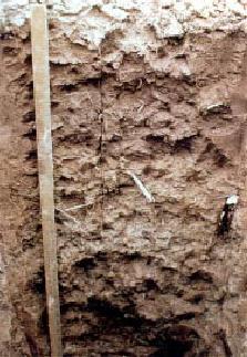 Menfro soil USDA 1.jpg