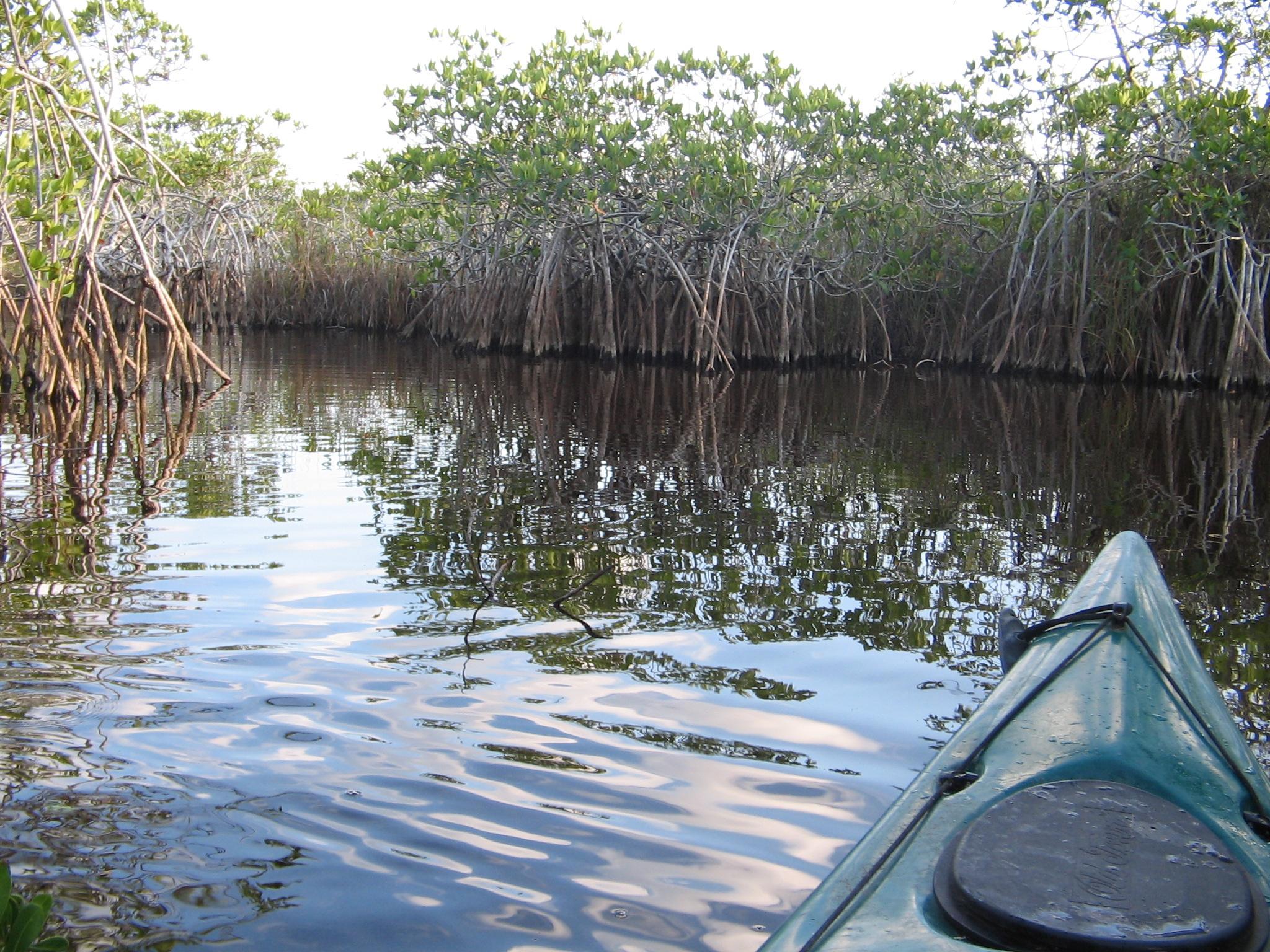 file noble hammock canoe trail  1  npsphoto  9099279043  jpg file noble hammock canoe trail  1  npsphoto  9099279043  jpg      rh    mons wikimedia org