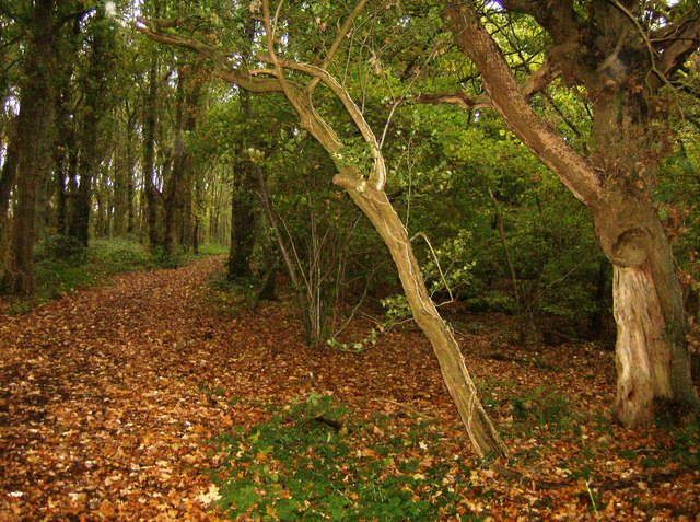 On the Hamstead Trail - geograph.org.uk - 606345
