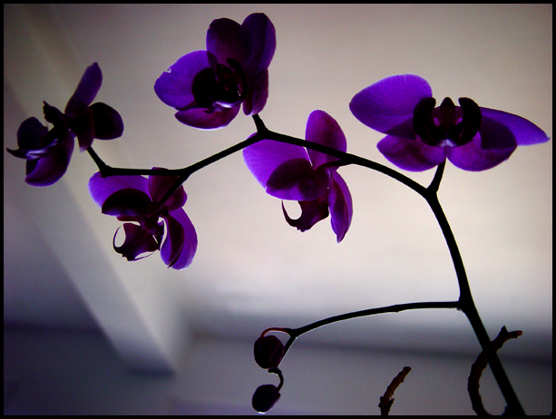 beautiful purple orchid flower. Permalink :| 2008-09-25 : | more