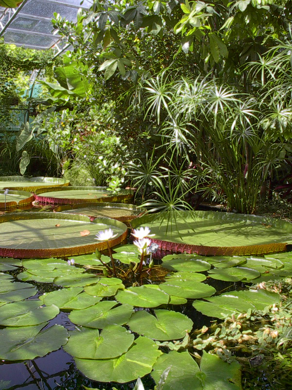 File oxford tropical wikimedia commons for Jardin tropical