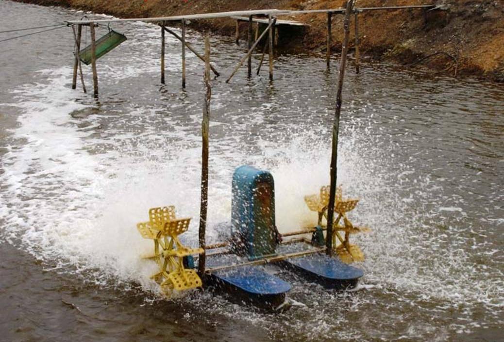 Alexander hamilton paddlewheel cruise to bear mountain for Homemade pond aerator plans
