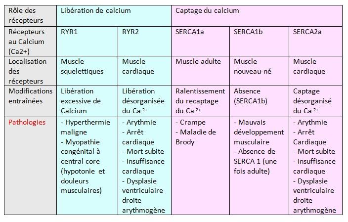 sarcoplasmique - definition - C'est Quoi