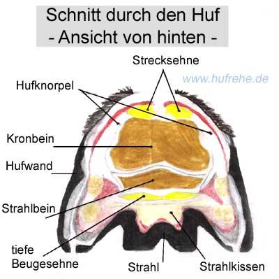 Huff Deutsch