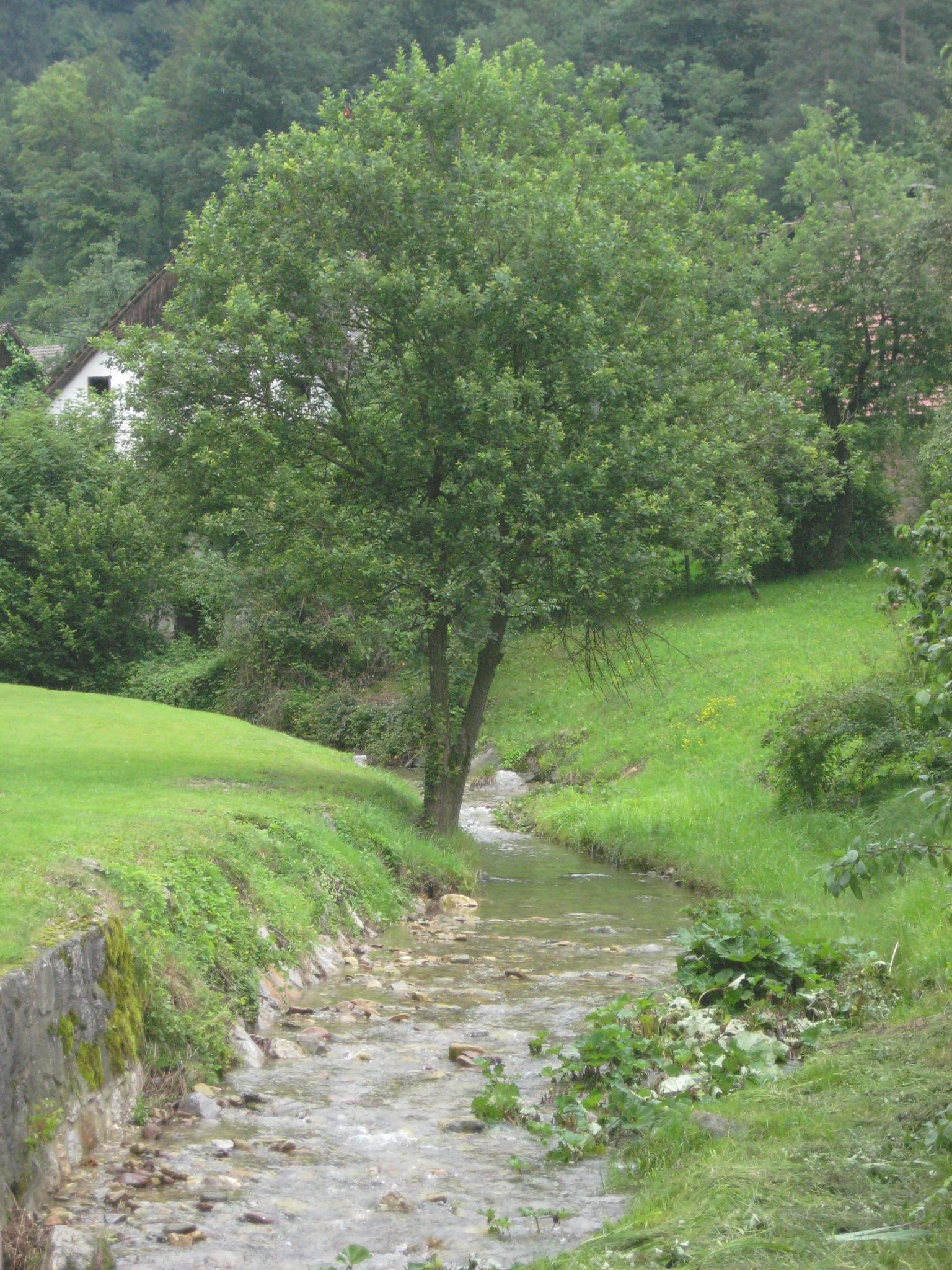Podlipščica (Ljubljanica)