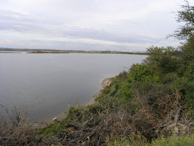 Radar Pool, near Cliffe - geograph.org.uk - 44922