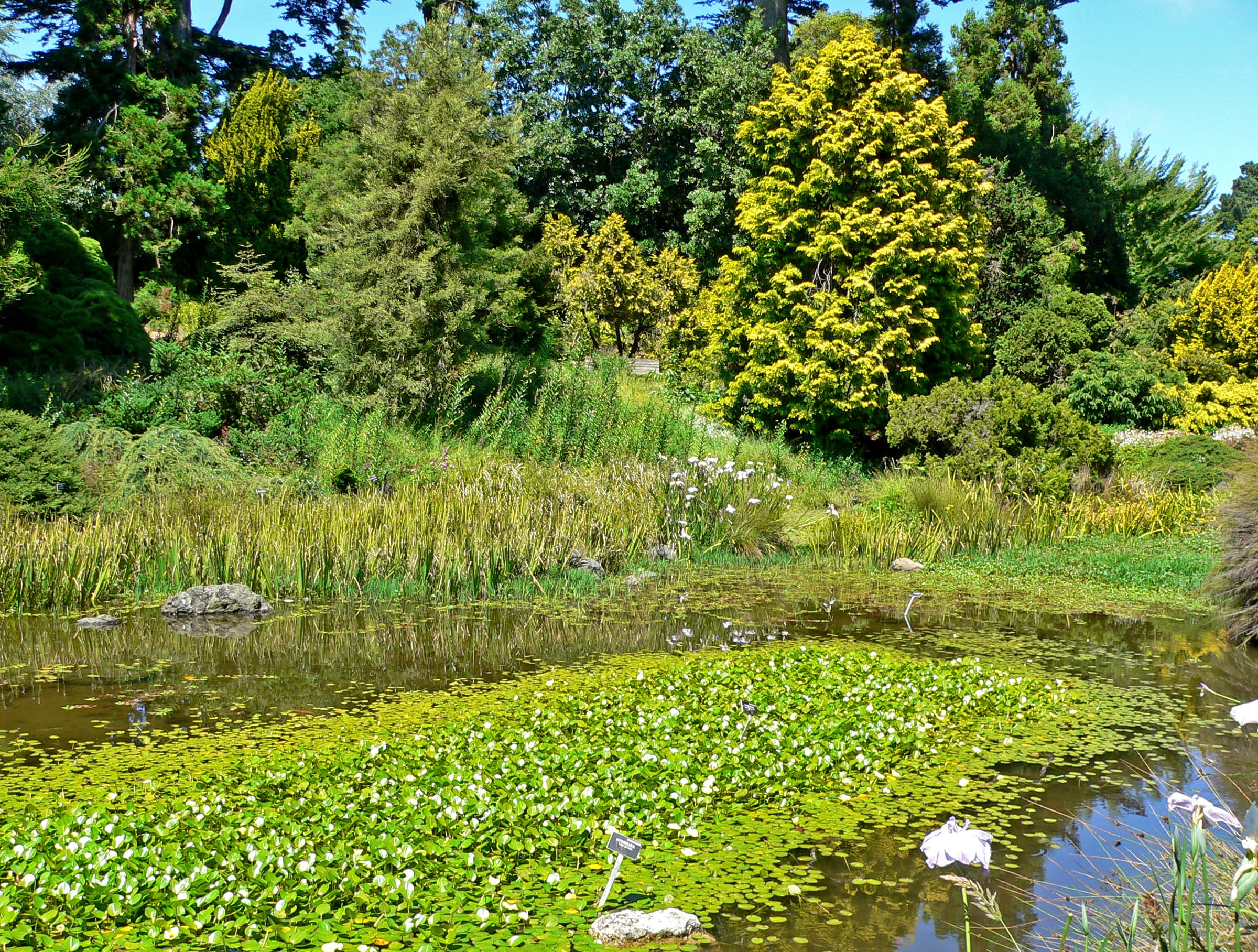 File San Francisco Botanical Garden Lily Wikimedia Commons