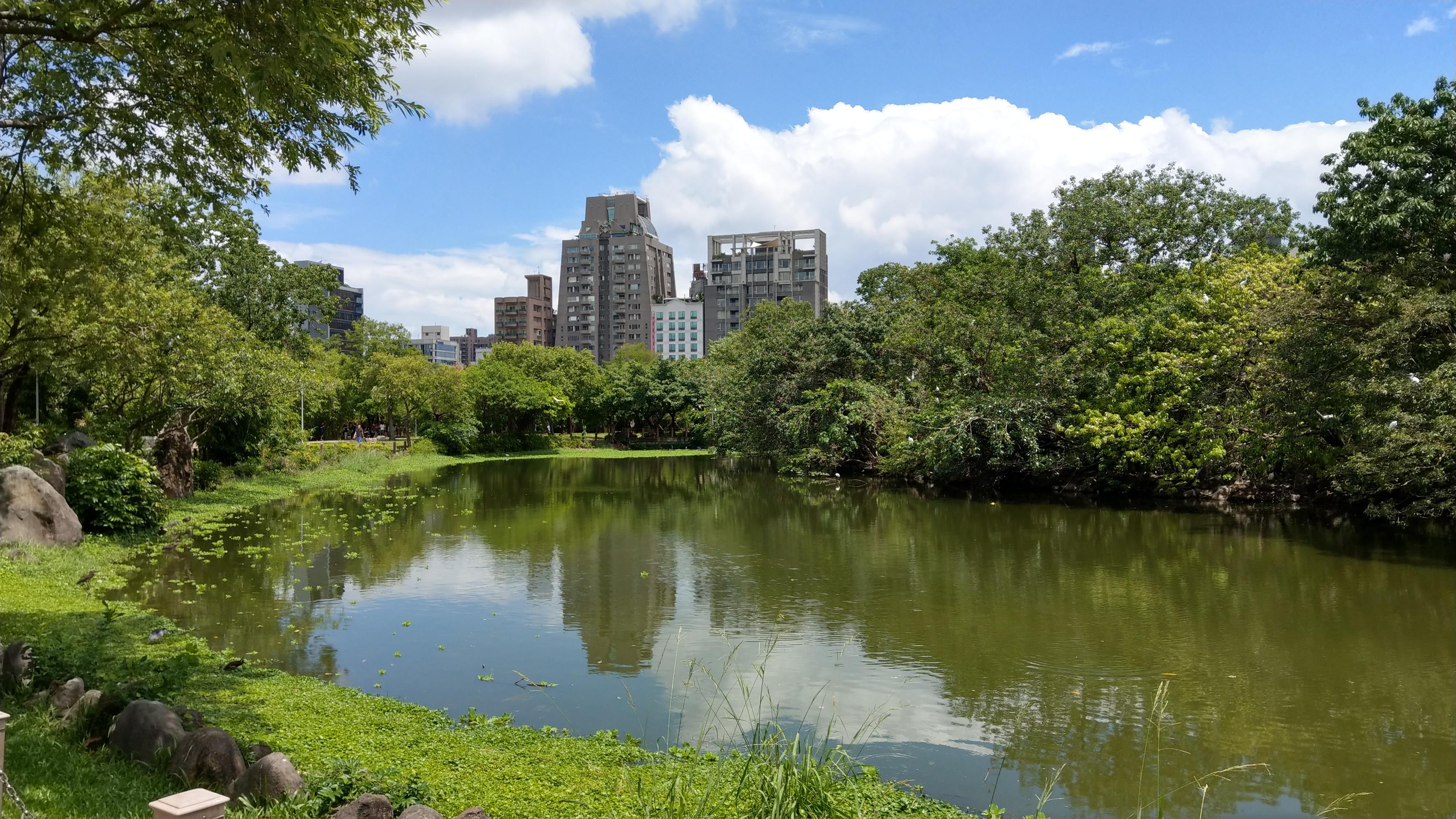 Taipei Daan Park - Ecological Pool - 20180805 - 02.jpg