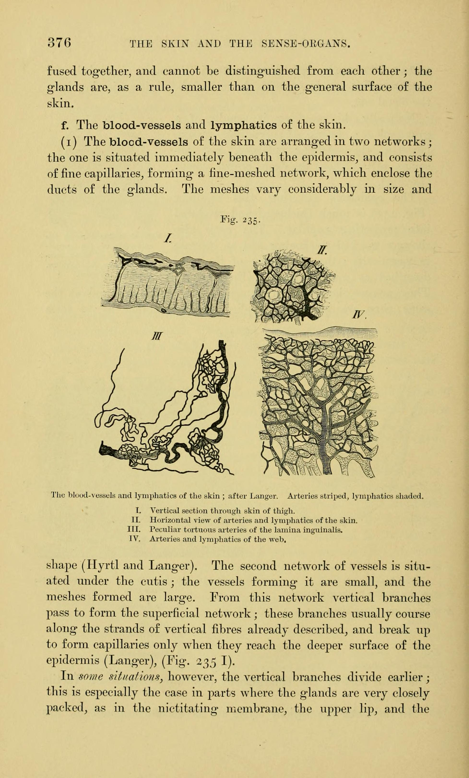Filethe Anatomy Of The Frog Page 376 Fig 235 Bhl7555146g
