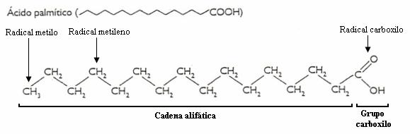 Biología Celular Macromoléculas Lípidos Wikilibros