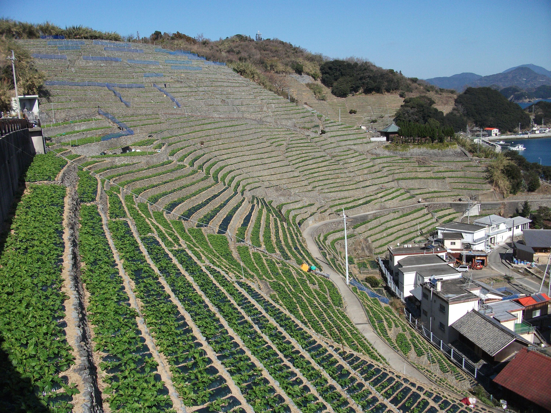 2012遊子水荷浦の段畑1.jpg