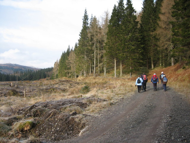 Achray Forest trail - geograph.org.uk - 1725240