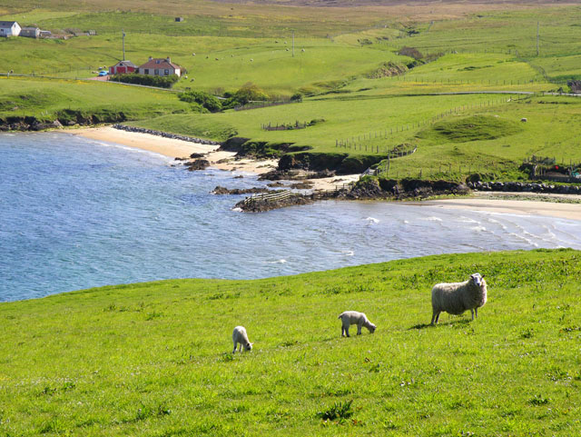 File:Bay of Ollaberry - geograph.org.uk - 1308013.jpg