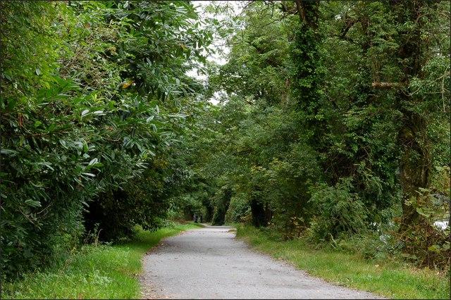 Castlewellan forest park (2) - geograph.org.uk - 550513