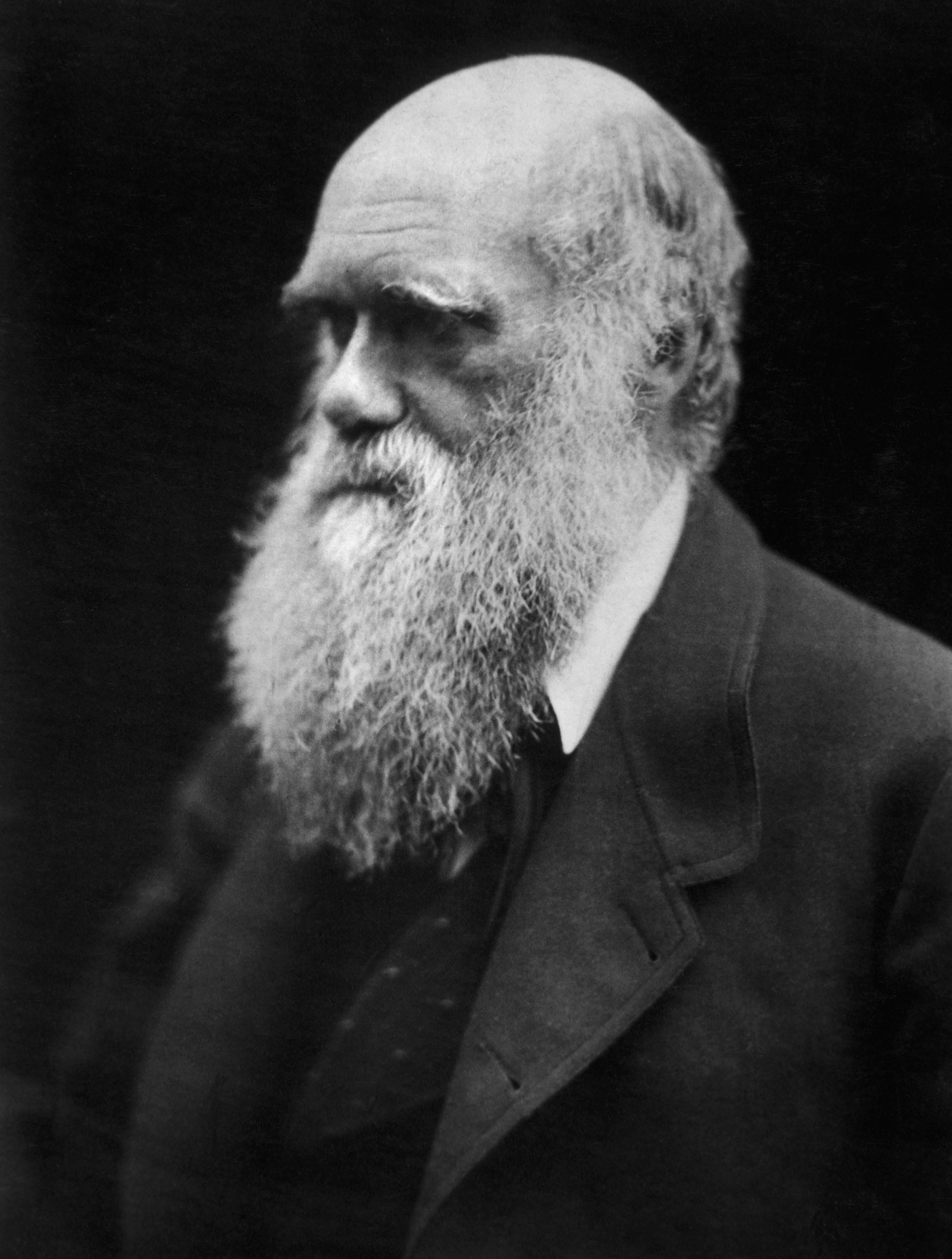 Darwin dating wikipedia