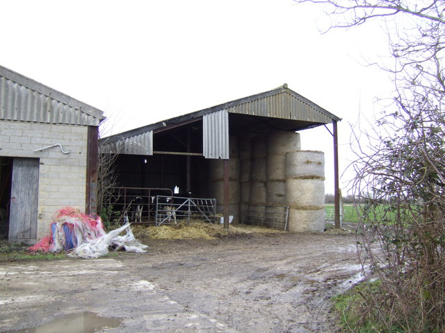 File:Dairy cattle in the barn - geograph.org.uk - 305782 ...