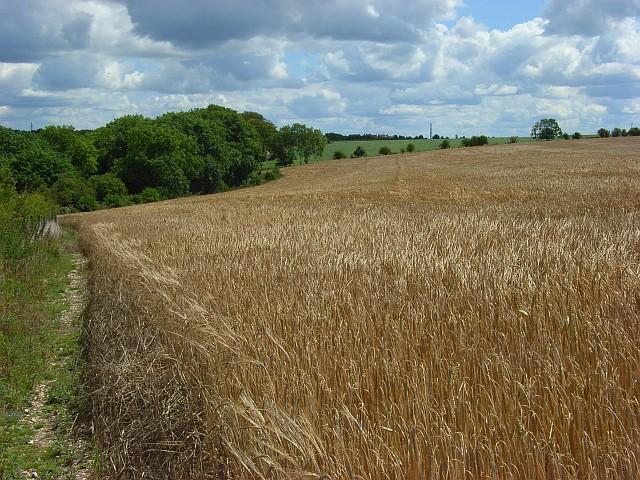 Farmland, Amesbury - geograph.org.uk - 491450
