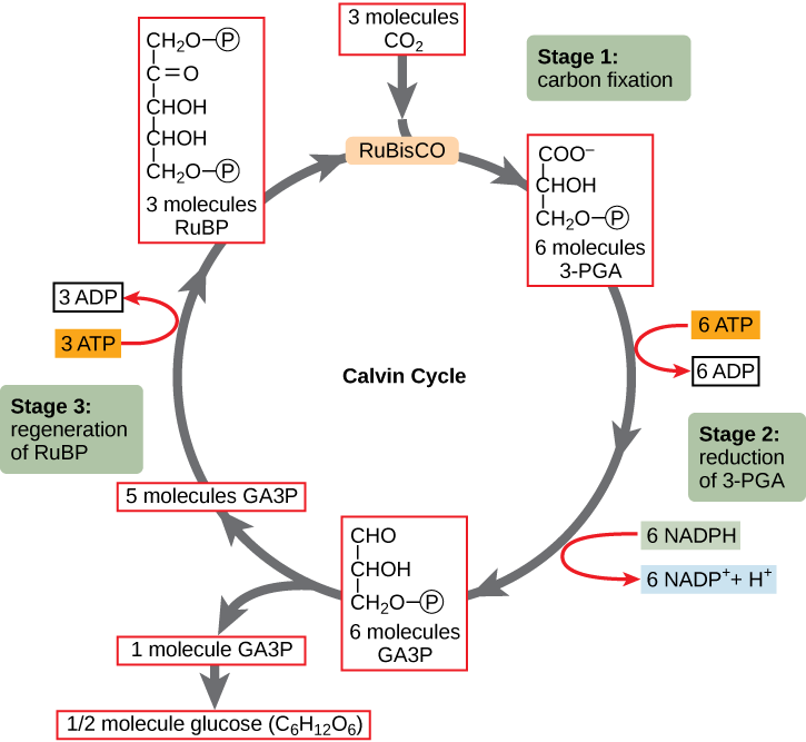 dna interactions between proteins essay Ecological interactions  which are highly specific proteins every protein of an  this explains why these organelles contain dna and protein synthesis.
