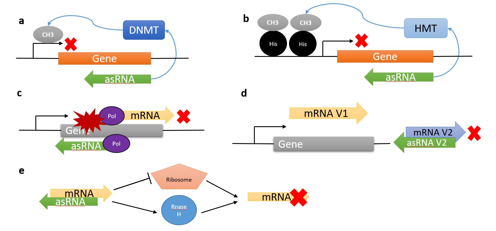 ARN ANTISENTIDO PDF