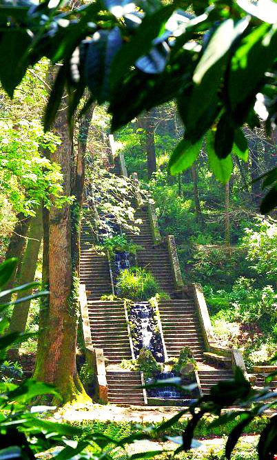 Buçaco Forest - Wikipedia