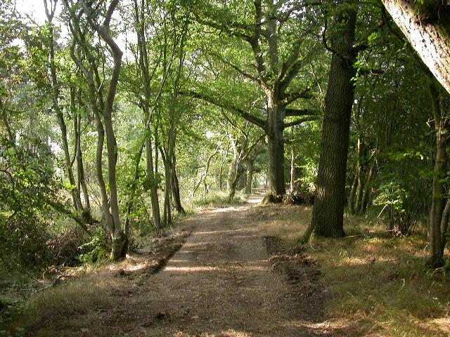 Green Side Wood - geograph.org.uk - 49331