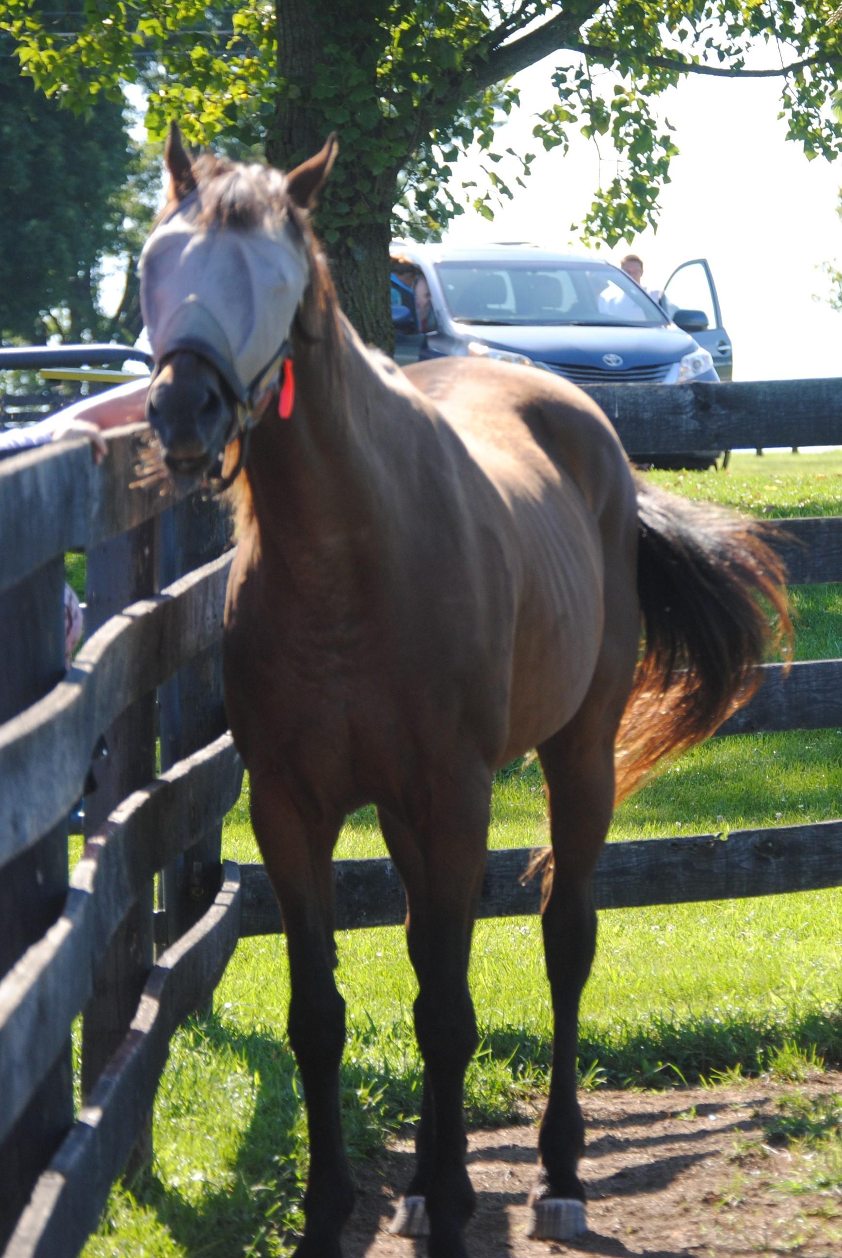 Gulch (horse) Wikipedia