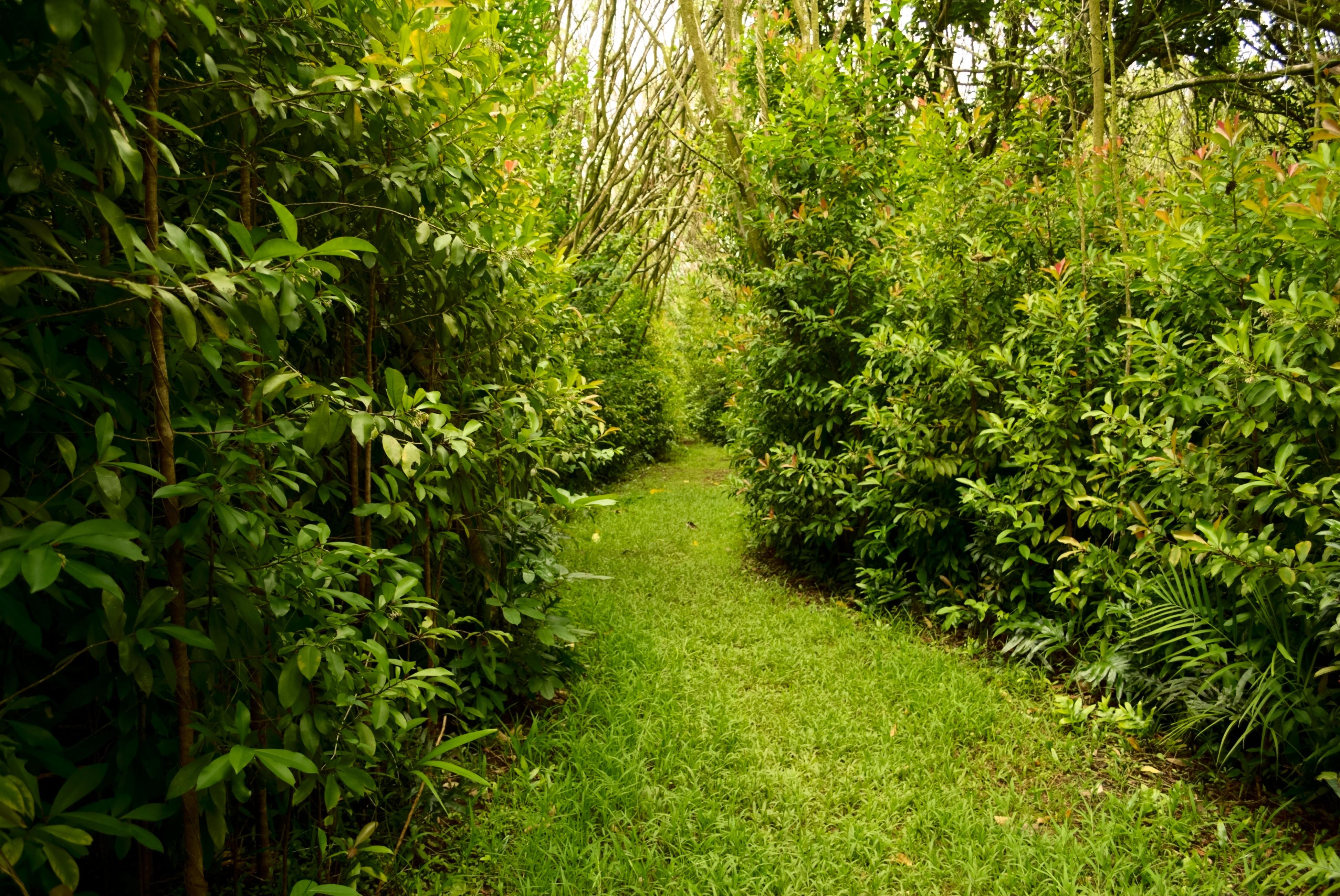Hoomaluhia Botanical Garden Trails Map Garden Ftempo