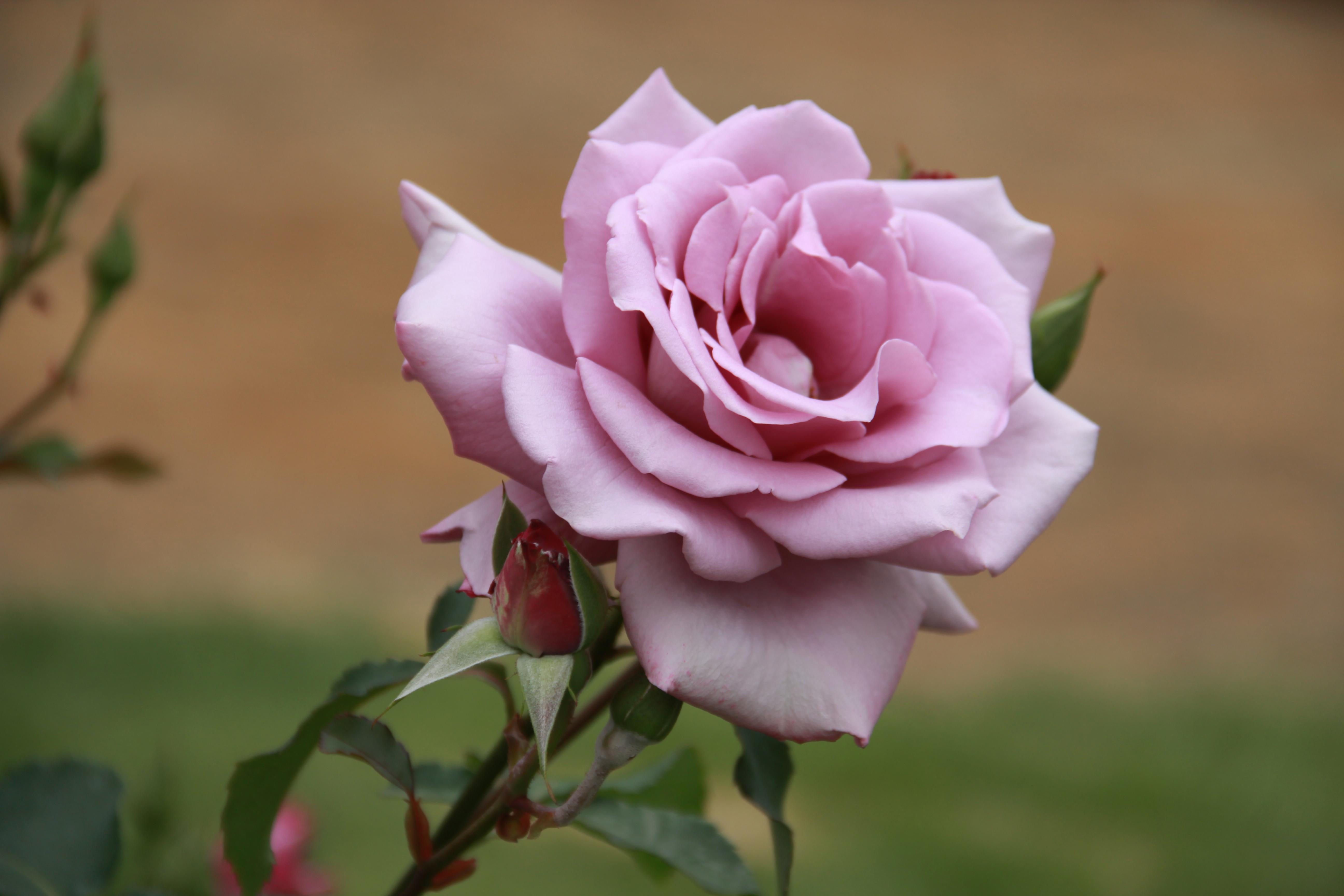 English Rose Tea Room Facebook