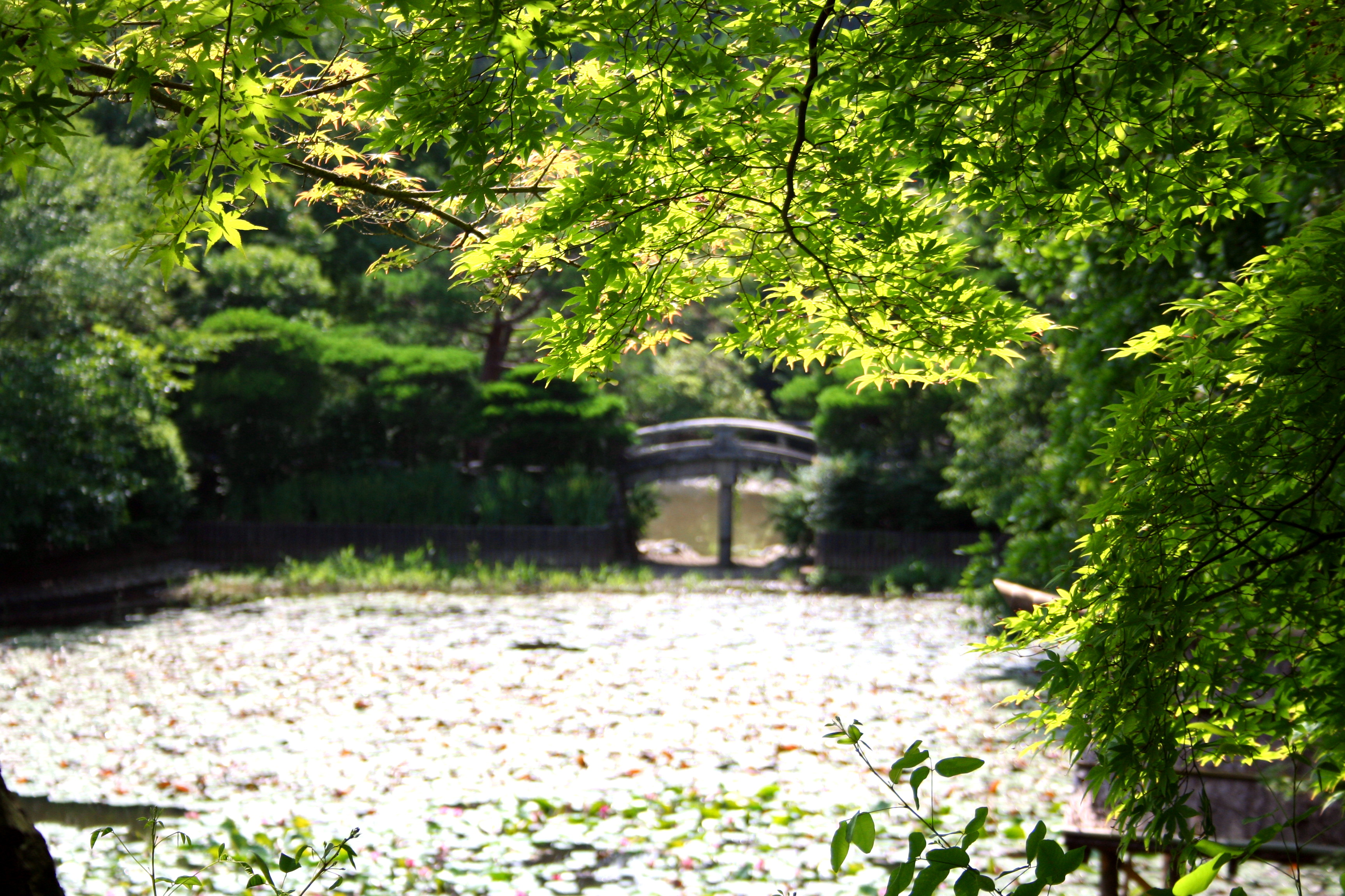 file lake outside ryoan ji temple jpg wikimedia commons