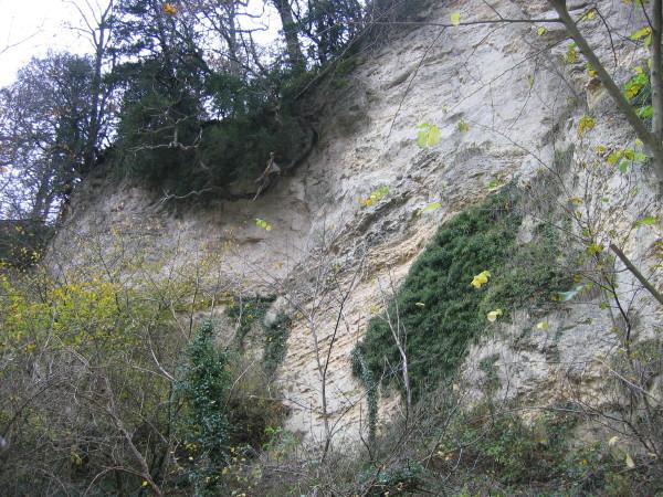 Limestone cliffs, Castle Eden Dene - geograph.org.uk - 282938