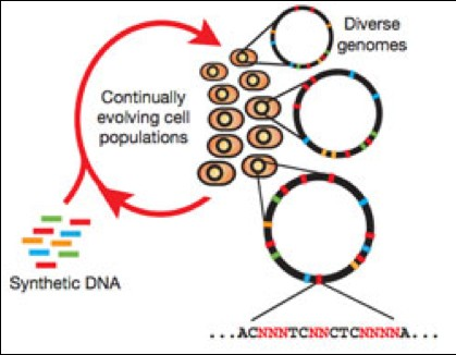 an essay on genetic engineering and eugenics Genetic engineering is a major issue in today's society because of it, things like the human genome project have become a reality genetic engineering is can be defined as the manipulation or alteration of the genetic structure of a single cell or organism this means that scientists can target a.