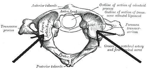 massa lateralis atlantis  u2013 wikip u00e9dia