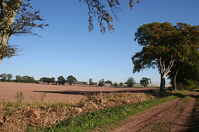 English: Mavisbank from Middle Drums The fields here are delineated by mature trees along the boundaries. Date 2 October 2007 Source From geograph.org