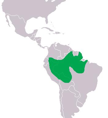 Dónde vive el melanosuchus niger - Caimán negro