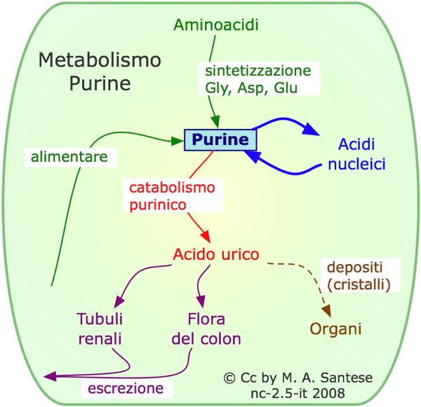 alimentos para combatir acido urico es malo el tomate frito para el acido urico como curar el acido urico con plantas
