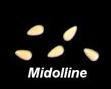 Midolline.jpg