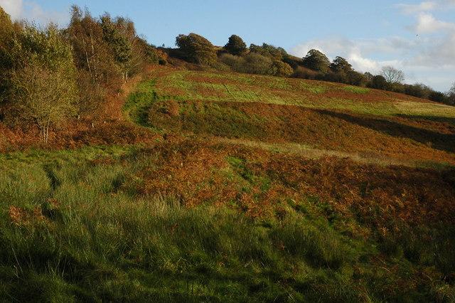 Midsummer Hill - geograph.org.uk - 1025909